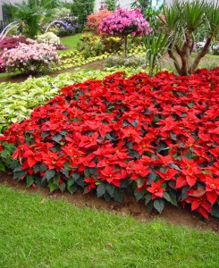 La decoración del jardín