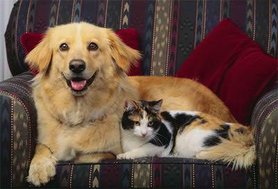 Gatos de companía para interiores