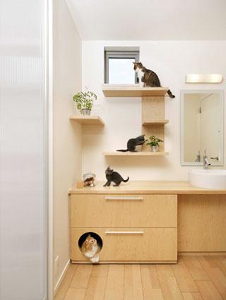 Adaptar un gato a su nuevo hogar
