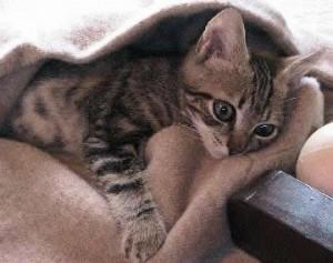 Consejo para el cuidado de gatos
