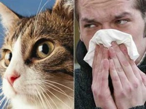 Prevenir las alergías provocadas por las mascotas.