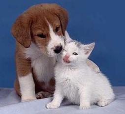 Las alergias de perros y gatos
