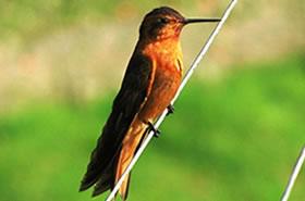 El avistamiento de aves.