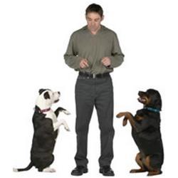Adiestramiento de perros.