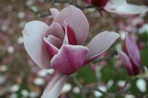 Tener un árbol de lirios y tulipanes