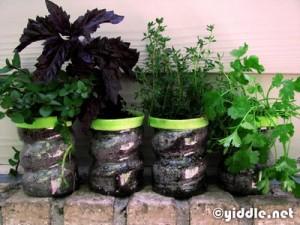 Crear un jardín de hierbas