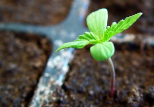La siembra de semillas