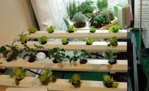 Cultivos hidroponicos