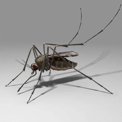 Dispositivos para eliminar mosquitos del jard n for Como eliminar los mosquitos del jardin