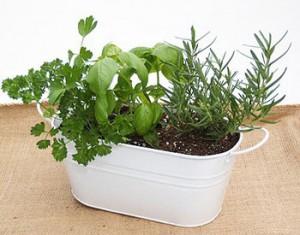 Cultivar hierbas