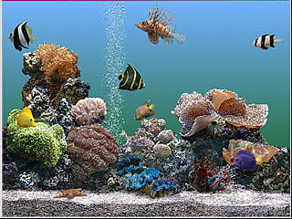 Introducci n a los acuarios de agua salada arquitectura for Peces artificiales para acuarios