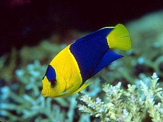 C mo elegir un pez tropical para su acuario arquitectura for Peces de agua dulce para peceras